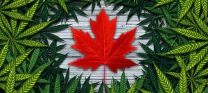 online weed shop Canada