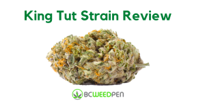 Buy King Tut Strain